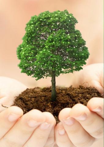 И-летом-сажают-деревья
